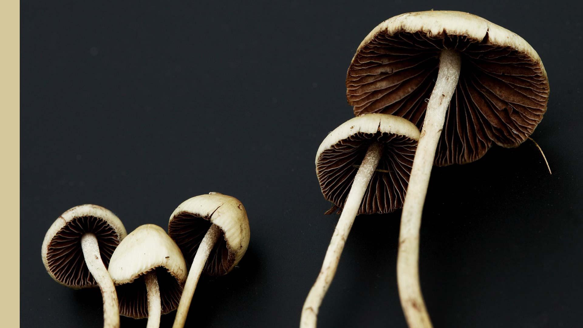 Magic-Mushrooms-top-image