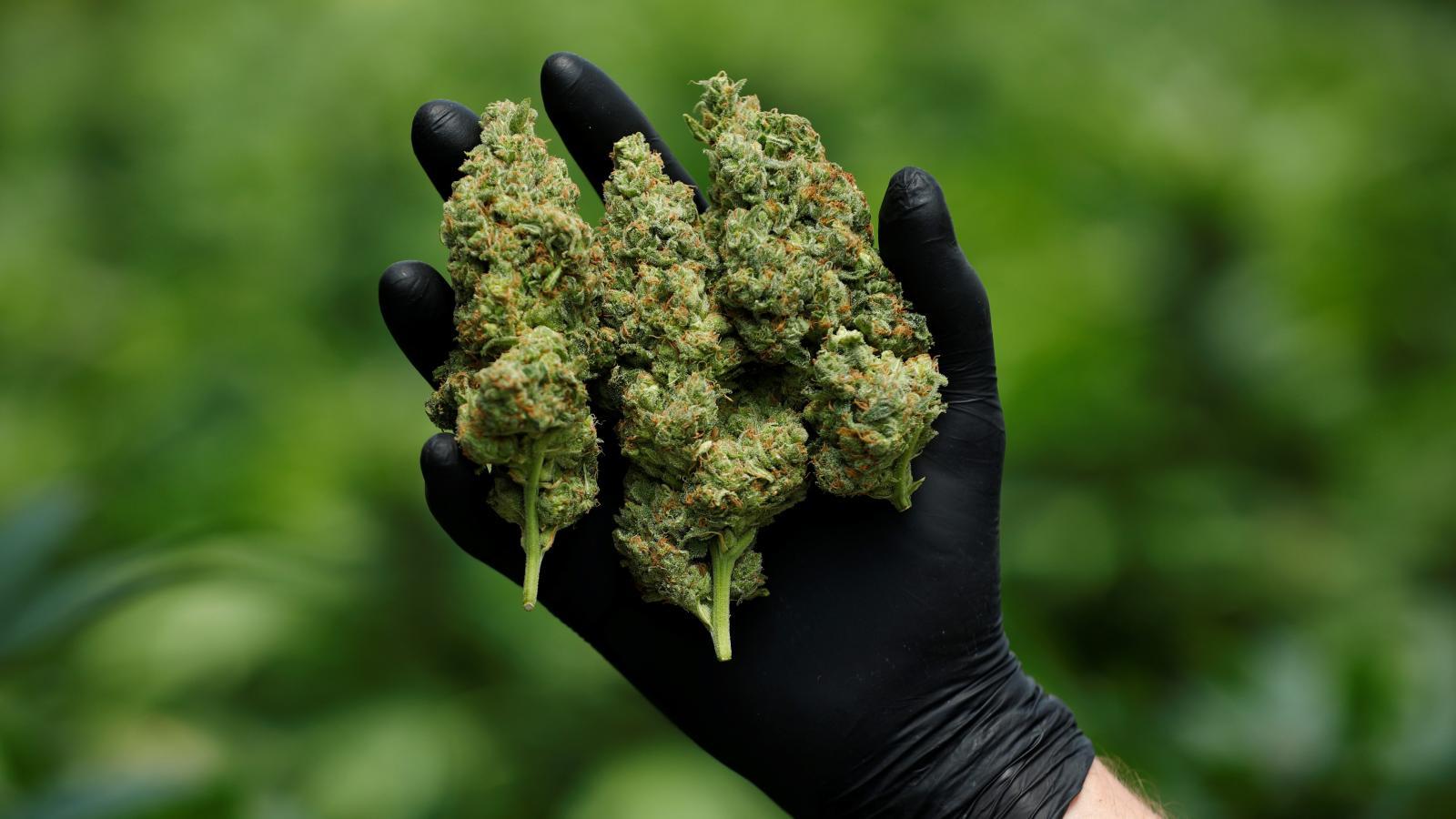 antitrust-cannabis-monopoly-e1593721551755